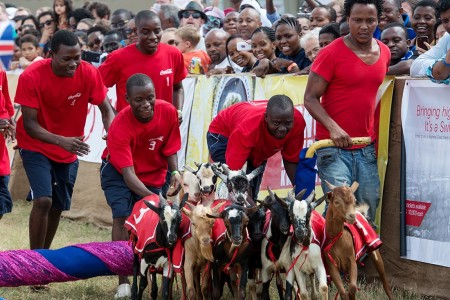 Dar es Salaam, Tanzania - 2015-05-30 - Goat races in Dar es Salaam, Tanzania on May 30, 2015. Photo by Daniel Hayduk