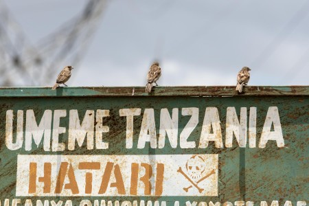 Birds sit on a TANESCO sign.  Photo: Daniel Hayduk