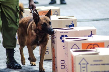 A dog and Tanzanian police officer inspect boxes as part of canine detection demonstration on March 2 at the Port of Dar es Salaam. Photo: US Embassy handout