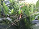 Big spider!